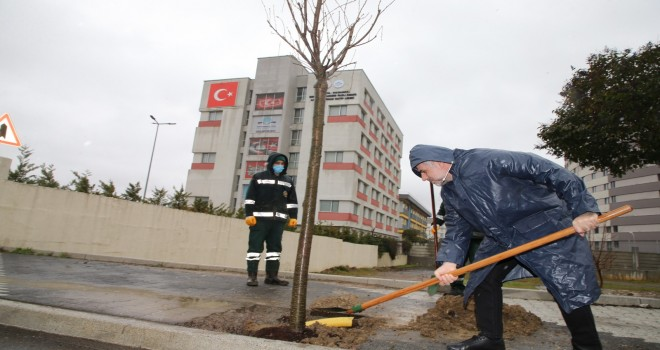 ORMAN HAFTASINDA SULTANBEYLİ'DE FİDAN DİKİLDİ